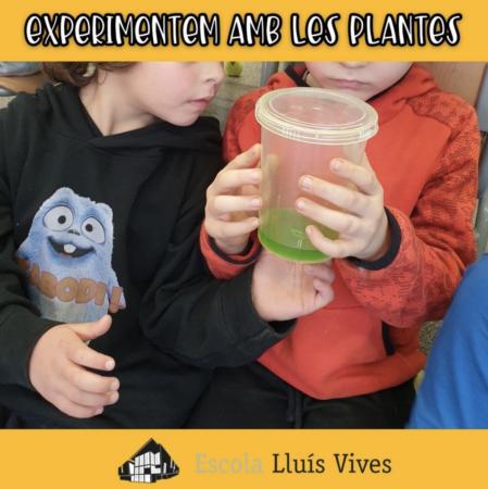 alumnes observant un experiment de plantes